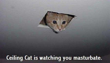 ceilingcat-011.jpg